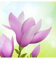 Magnolia Flower vector image vector image
