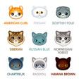 Cute cat icons set II vector image
