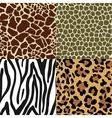Animal Skin Patterns vector image