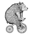 bear on bicycle engraving style vector image