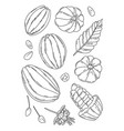 cocoa fruit doodle set vector image