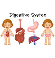 Girl and digestive system diagram vector image vector image