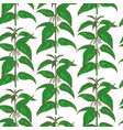 hand drawn colored nettle background vector image
