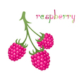 Raspberry Branch vector image vector image