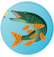 pike fish vector image