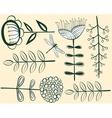 seamless vintage flower pattern herbarium vector image