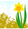 card with one single daffodil vector image