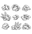 pistachio isolated on white background vector image