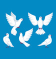 set of five white doves beautiful pigeons faith vector image vector image