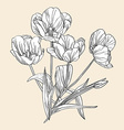 hand drawn decorative tulips vector image