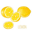 Lemons vector image