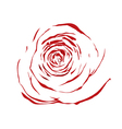abstract sketch red rose effect of a watercolor vector image