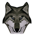 cartoon mascot image grey wolf head vector image