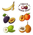 hand drawn of banana plum peach vector image