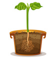 Planting tree in the clay pot vector image