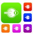 human eyeball set collection vector image
