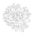 floral elements hand drawn vector image vector image