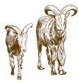 engraving drawing of two mountain goats vector image