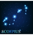 the scorpius zodiac sign of the beautiful bright vector image vector image