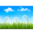 Nature background with dandelions vector image vector image