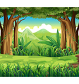 The green forest vector image