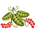 Single flat green leaf with tendrils and red seeds vector image vector image