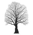 tree silhouette black bare oak outline detailed vector image