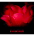 red flower on a black background vector image vector image