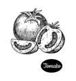 hand drawn sketch style tomato vector image