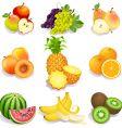 summer fruit vector image
