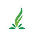 leaf ornament logo vector image