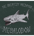 Vintage label with shark-Megalodon vector image