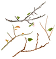 Branch various Sprigs twig tree and bush vector image