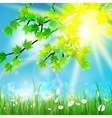 Green leaves on sky and grass vector image