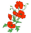decorative red poppies vector image