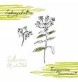 Siberian folk medecine herbs set vector image