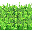 horizontal seamless pattern green grass vector image vector image