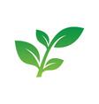 leaf sign ornament logo vector image