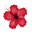 hibiscus flower exotic nature vector image