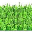 Horizontal seamless pattern green grass vector image