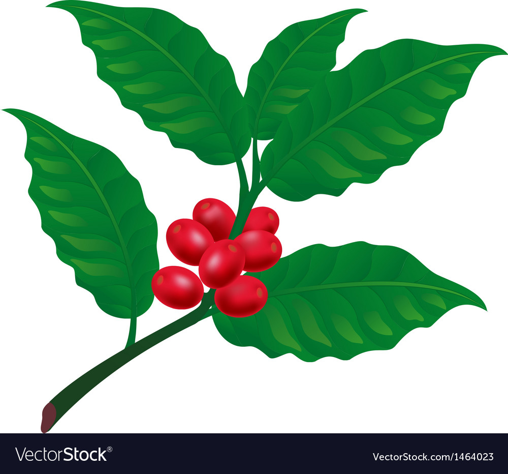 Coffee tree branch vector