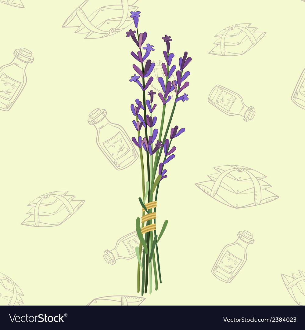 Seamless pattern with a bouquet of lavender vector