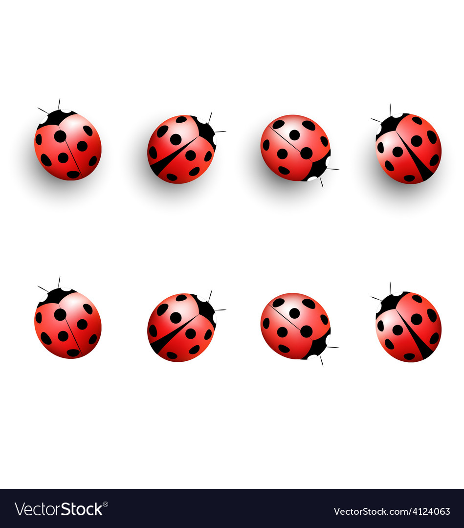 Four lady bugs with shadows and isolated on white vector