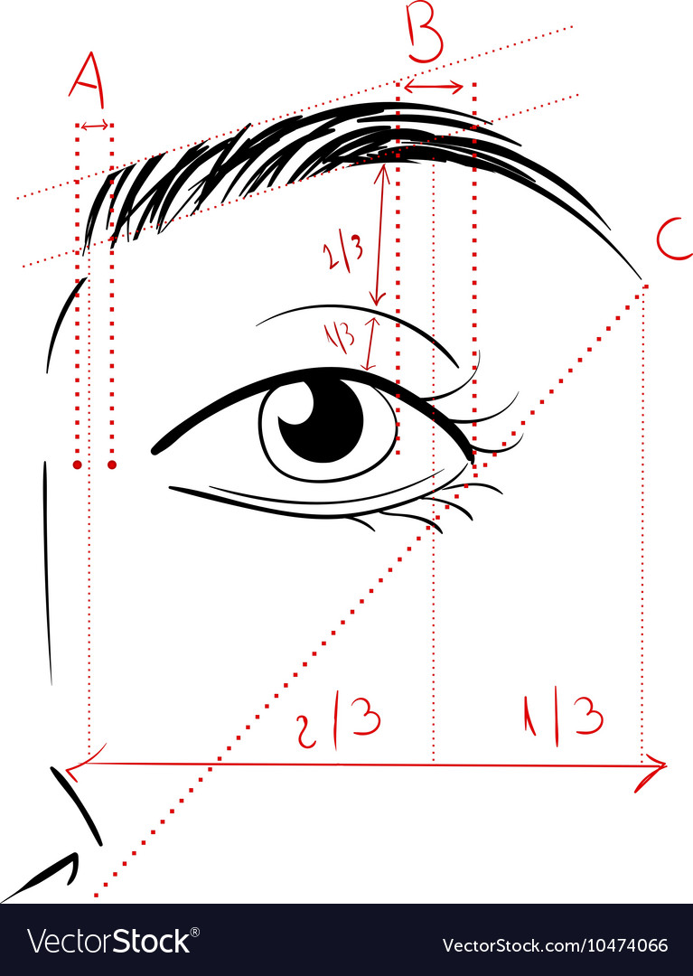 Shaping the eyebrows vector