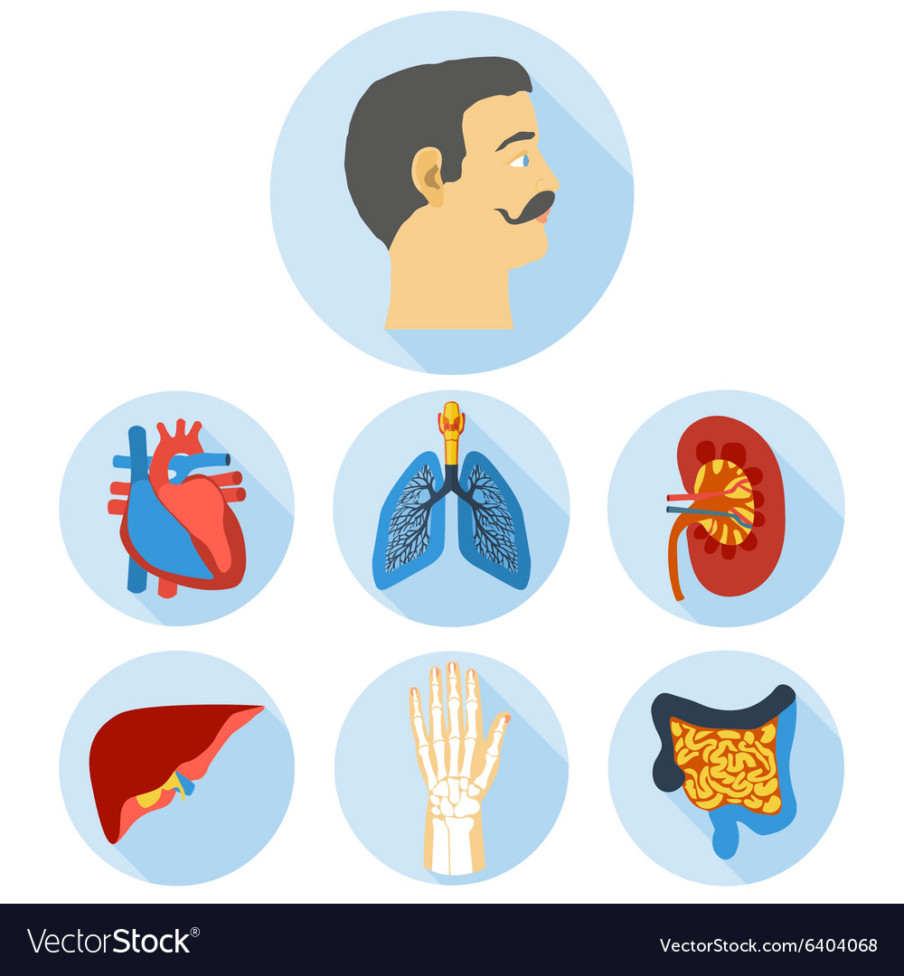 Flat design icons of human anatomy vector