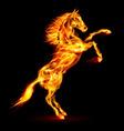 Fair Horse on hind legs 01 vector image vector image