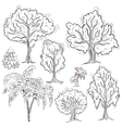 Set of isolated sketched trees vector image vector image