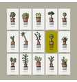 Business cards with cactus in pots sketch for vector image vector image