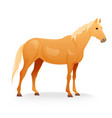 Realistic horse with red coat vector image
