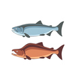 fish salmon vector image